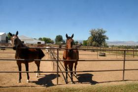 Paddocks with Horses